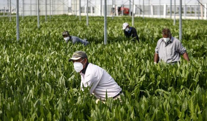 La Chiesa di Gaeta sostiene la proposta di regolarizzazione degli immigrati in Italia